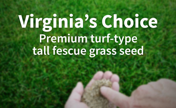 Exclusive! Virginia's Choice Grass Seed
